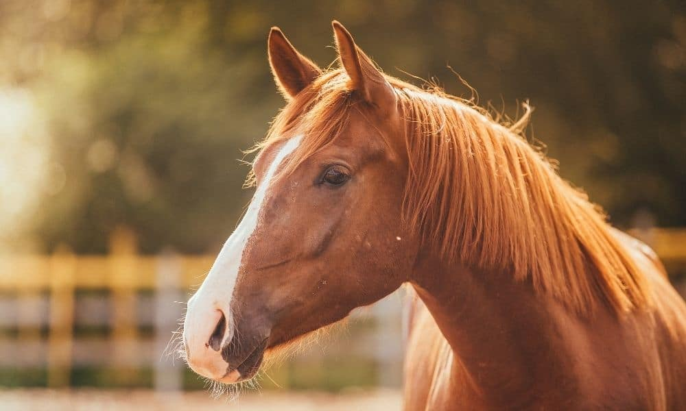 How Equine Therapy Can Help With MS